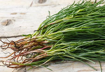 Eden della frutta selezione di verdure il cavolo nero - Diversi tipi di barba ...