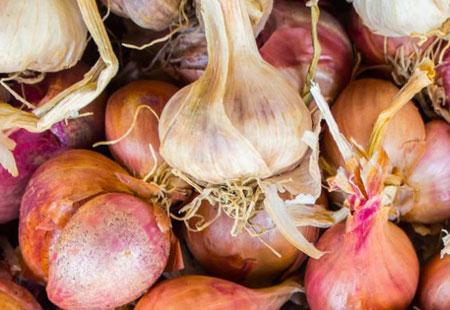 Cipolla Ramata di Montoro, varietà autoctona